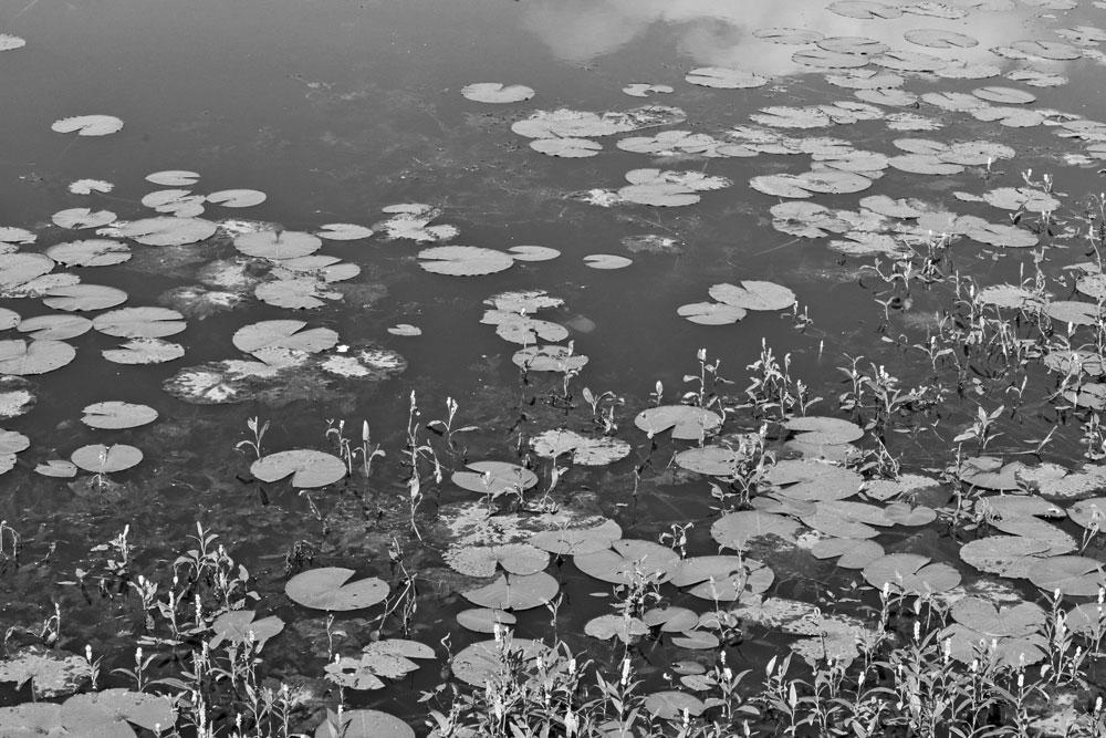 ponds black and white
